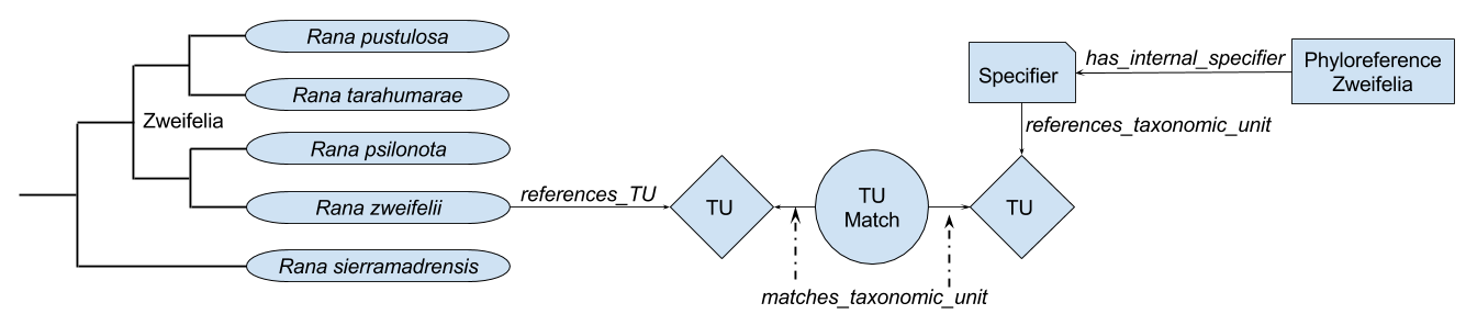 Matching nodes to phyloreferences in OWL using specifiers